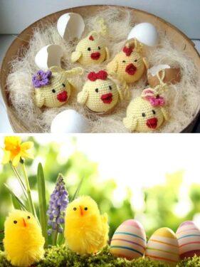 цыплята с яйцами